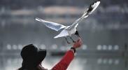 银川市确定8个鸟类保护基地