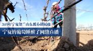 2019年宁夏贺兰山东麓春耕展藤 宁夏的葡萄睡醒了网络直播