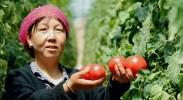 原州区冷凉蔬菜产业带动农民人均纯收入突破1.5万元