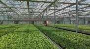 回访总书记视察的冷凉蔬菜基地:探寻