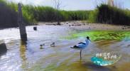 """【我和湿地有个约会】深入青铜峡库区湿地""""无人区"""" 每一秒都美哭!"""