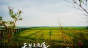银川兵沟黄河大桥(六)