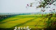 银川兵沟黄河大桥