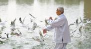 红嘴鸥:行迁徙之旅 憩宁夏驿站