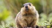 央视新冠肺炎防疫公益广告《野生动物保护篇》