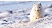 首部北极科考题材纪录片《光语者》 营造冰天雪地里的世外桃源