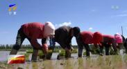 嘱托牢记心头 再启奋进征程  稻田画中节水兴 现代农业绘新貌