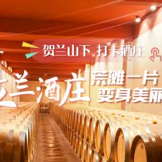 【直播】贺兰山下打卡酒庄| 立兰酒庄:荒滩一片变身美丽庄园