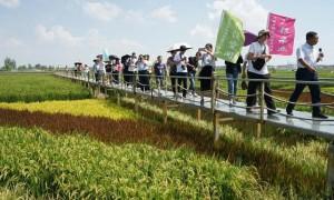 稻渔空间生态观光园:银川都市