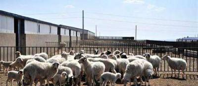 """盐池县打造30个标准化""""羊村"""""""