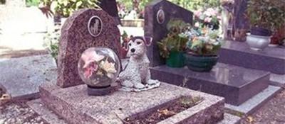宠物殡葬行业问题多 宠物墓地回避是否有资质问题