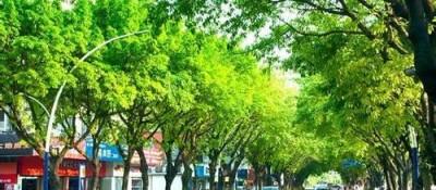 银川见缝插绿让城市拥抱森林