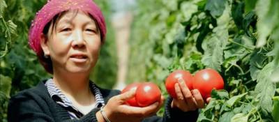 原州区冷凉蔬菜产业带动农民?#21496;?#32431;收入?#40644;?.5万元