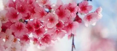 春暖花开 你能叫出这些花的名字吗?