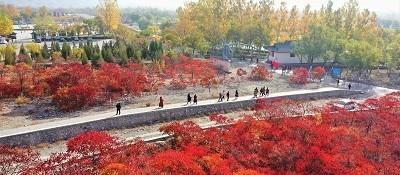 红叶尽染贺兰山