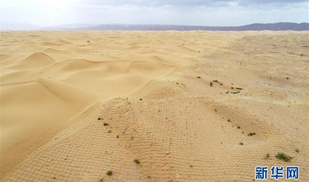 寧夏中衛:草方格扎出的沙漠綠意