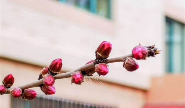 春天来了:桃红柳绿候鸟飞
