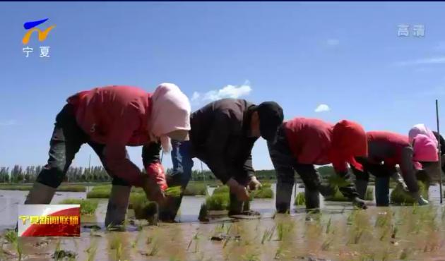 嘱托牢记心头 再启奋进征程 |稻田画中节水兴 现代农业绘新貌
