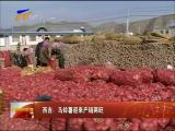 西吉:马铃薯迎来产销两旺-2017年11月15日