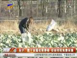 永宁:数十亩莲花菜滞销 任由市民免费采摘-2017年12月12日