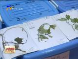 宁夏19个县区通过中药资源普查验收-2018年5月31日
