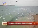 灵武市一处湖心岛发现国家一级保护动物遗鸥-180724