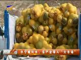 """中宁喊叫水:瓜产业闯入""""大市场""""-180816"""