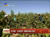 红寺堡:丰收季节 葡萄采摘正当时-181005