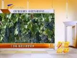 丁洁杨:我把沙漠变绿洲