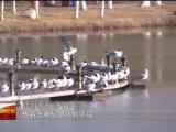 宁夏:候鸟北归印证环境变迁-190322