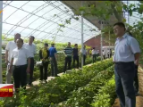 国家农业农村部蔬菜专家指导组一行走进宁夏-190615