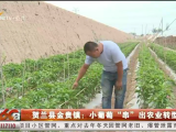 """贺兰县金贵镇:小葡萄""""串""""起农业转型-190716"""