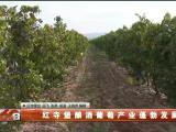 红寺堡酿酒葡萄产业蓬勃发展-191015