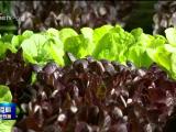 银川:线上销售菜农收入不减 线下配送市民蔬菜保障不断-0228