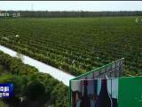 2020贺兰红·金树国际葡萄酒电影电视艺术节参赛作品征集开始-0306