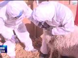 贺兰县有序开展畜禽疫苗免疫注射工作-200305