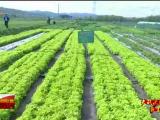 决战决胜脱贫攻坚 王河村的春天-200406