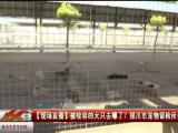 【现场直播】被收容的犬只去哪了?银川市宠物留检所投入使用-200602