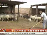二十多只羊被盗 民警星夜兼程帮找回-200701