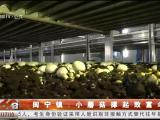 闽宁镇:小蘑菇撑起致富伞 科技助力企业与农户双赢-200703