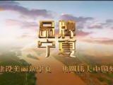 品牌宁夏:拍鸟人-20200817