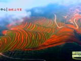 """彭阳县第二届梯田节暨""""梯田百合 美丽彭阳文化旅游节"""""""