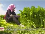 """海原:农业产业多点开花 百姓增收""""钱""""景广阔-20200927"""