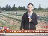 西夏区西干村:千亩大葱开镰收割迎丰收-20200921