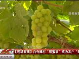 """白寺滩村""""甜蜜果""""改为农户""""致富果""""-20200919"""