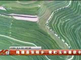 隆德县张程乡:青贮玉米喜获丰收-20200919