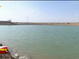 红寺堡区:盐碱化治理助农增收-20210110