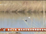 春回大地 候鸟回迁现身阅海国家湿地公园-20210301