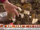 """青铜峡:羊肚菌抢""""鲜""""上市 村民采摘忙-20210301"""