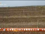 """红寺堡区10余万亩葡萄出土上架""""沐春光""""-20210416"""